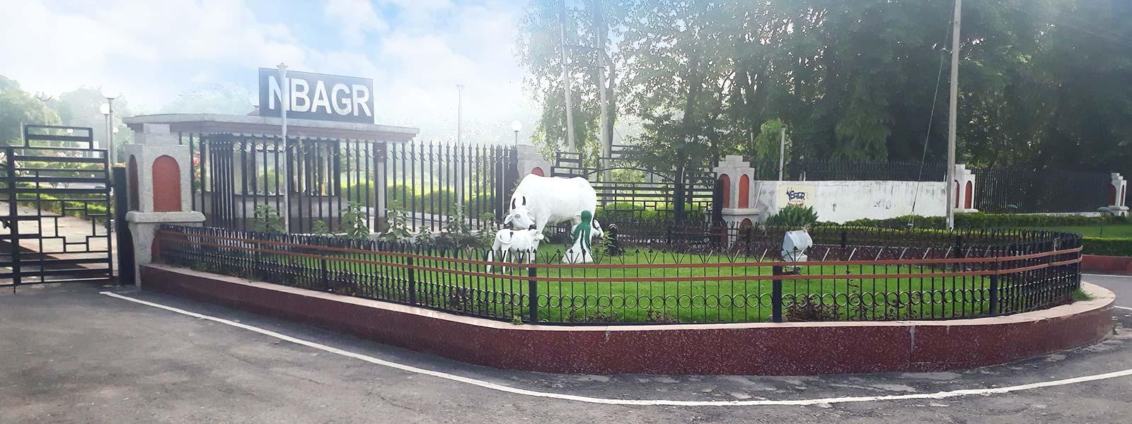 nbagr slider gate