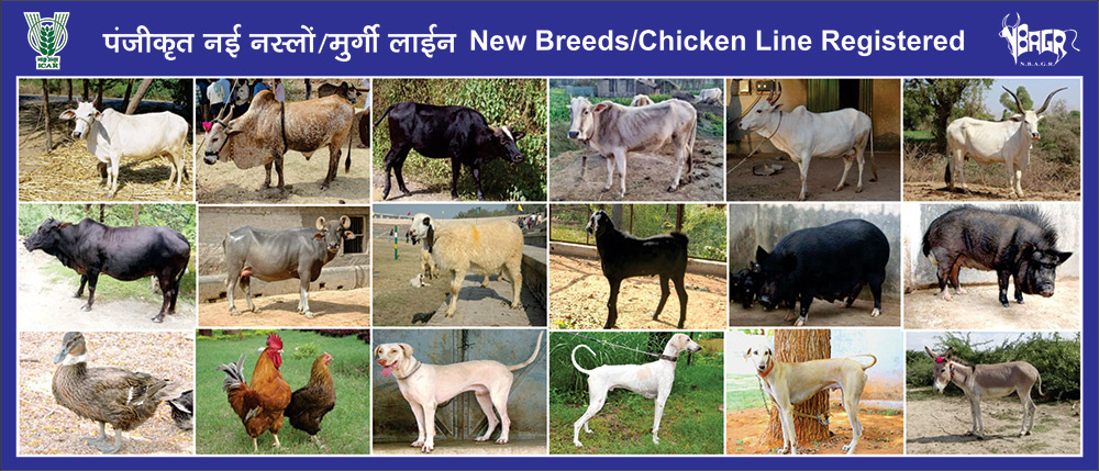 nw breed post